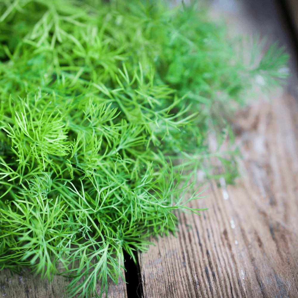 Indoor Herbs That Make Your Kitchen More Vibrant