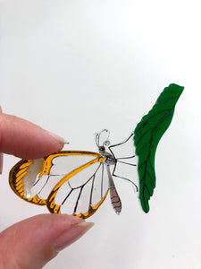 Glasswing Butterfly on Leaf - Laser Cut Acrylic Brooch