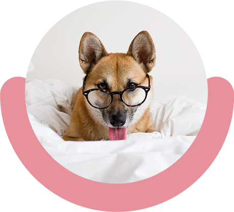Learn more about Doglyness