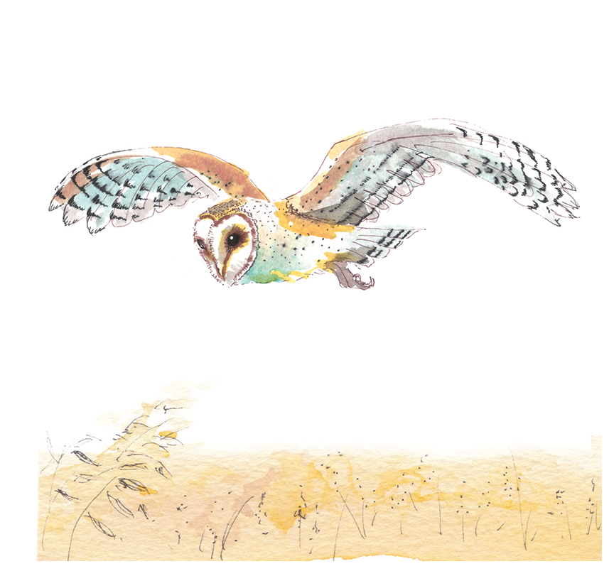 The Barn Owl #Heart431 - Greeting Card