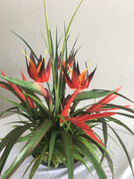 Number 8 - Red Bird of Paradise with Red Heliconia in a Tropical Setting