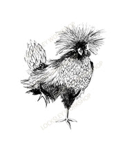 Load image into Gallery viewer, Polish Chickens - Set of 3 - Original Art Print