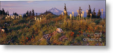 Load image into Gallery viewer, Beargrass Sunset - Metal Print