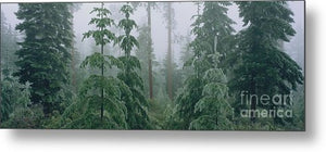 Black Butte Mist - Metal Print