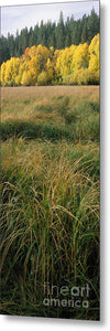 Fall Grass - Metal Print