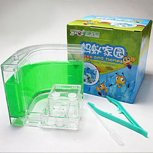 Ant Farm Box
