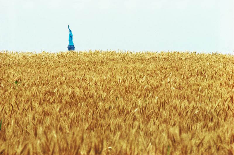 Agnes Denes, Wheatfield—A Confrontation. Two acres of wheat planted and harvested by the artist on the Battery Park landfill, Manhattan, Summer 1982. Commissioned by Public Art Fund. Courtesy the artist and Leslie Tonkonow Artworks + Projects.