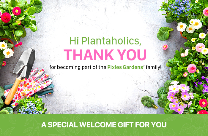 Welcome to Pixies Gardens Family