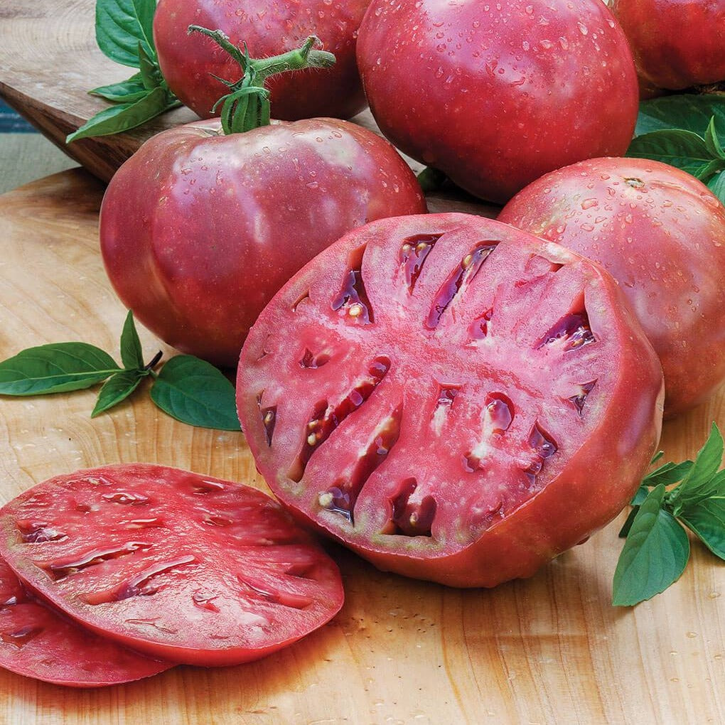 "Tomato Plant ""Cherokee Purple"", Rich, Dark Color and Unmatched Sweet, Rich Taste"