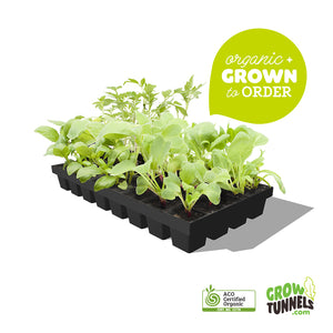 Organic Vegetable Seedlings - Salad Box - 24