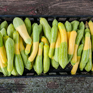 Courgettes-Zephyr
