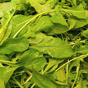 Arugula (4 oz box)