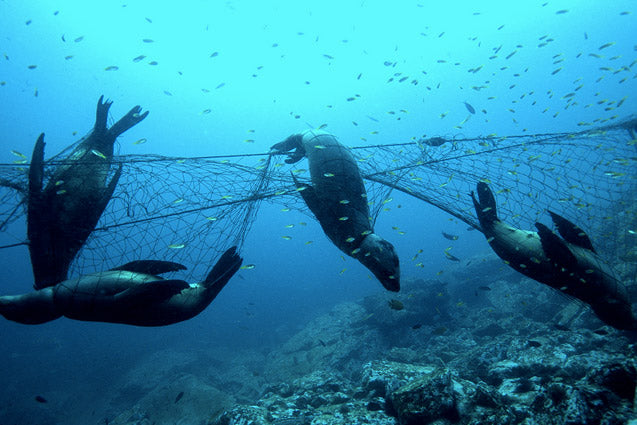 recycled fabrics made from fishing-nets