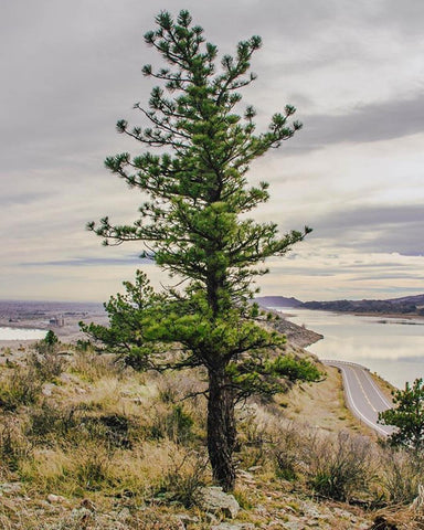 Horsetooth'd Photo- November 2017