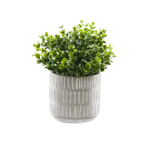 Artificial English Boxwood on White Background