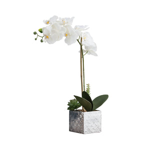 Imitative White Synthetic Orchid on White Background