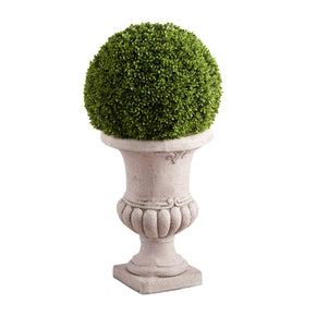 Regal Boxwood Topiary