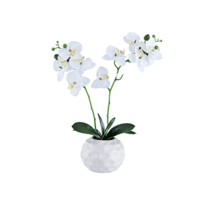 Double Stem White Synthetic Orchid on White Background