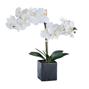 Synthetic Two Stem Orchid-White