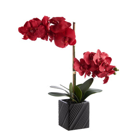 Red Synthetic Two Stem Orchid on White Background