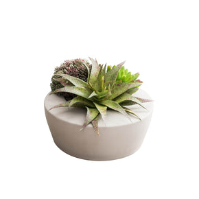 Synthetic Succulent Arrangement on White Background