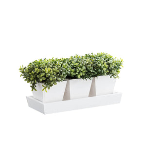 Set of 3 Mini Boxwoods With Tray