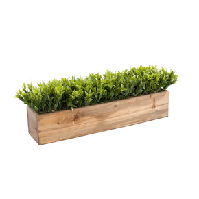 Greenery in Real Wood Brown Box