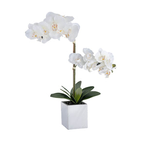 White Artificial Orchid Arrangement on White Background