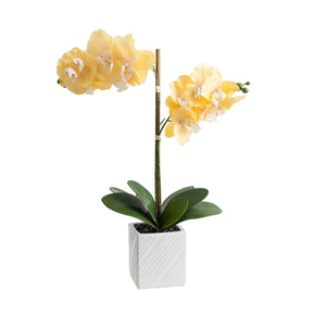 Yellow Artificial Orchid Arrangement on White Background