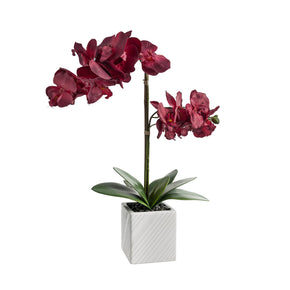 Red Artificial Orchid Arrangement on White Background
