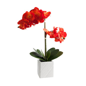Orange Artificial Orchid Arrangement on White Background