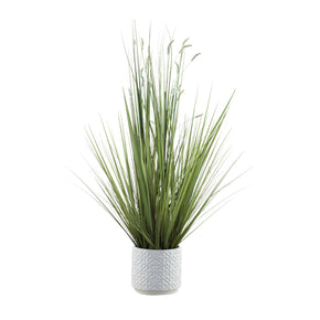 Sprouted Ornamental Grass