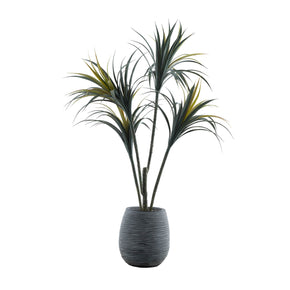 Grand Yucca Tree in Magnesia Pot