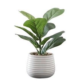 Fiddle Leaf Fig In Ceramic Pot