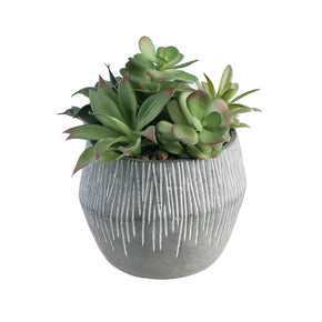 Succulent Mixture in Coconut Pot on white background