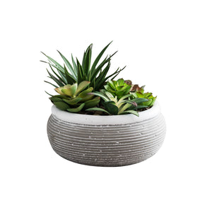 Succulent Garden in Cement pot on white background