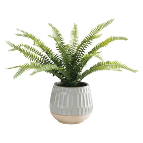 Boston Fern in Glazed Pot