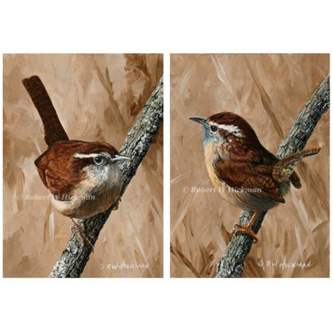 Carolina Wren Set by Robert Hickman