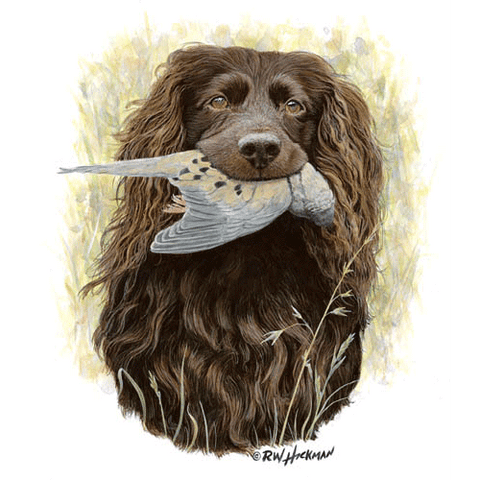 Faithful -Boykin Spaniel- by Robert Hickman