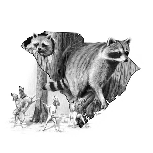 SC Traditions - Raccoon by Robert Hickman