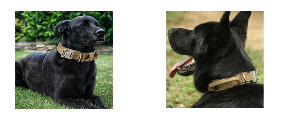 EXCELLENT ELITE SPANKER Tactical Dog Collar