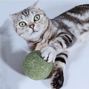 Cat's Rotating Globes