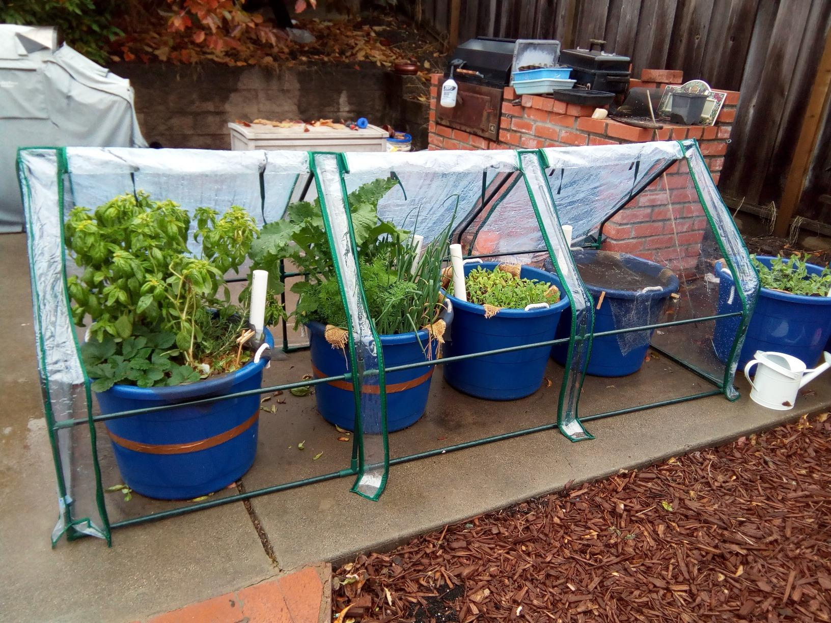 "Potted vegetables grew in Quictent 95"" x 36"" x 36"" Mini Greenhouse -1"