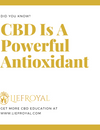 CBD Is A Powerful Antioxidant