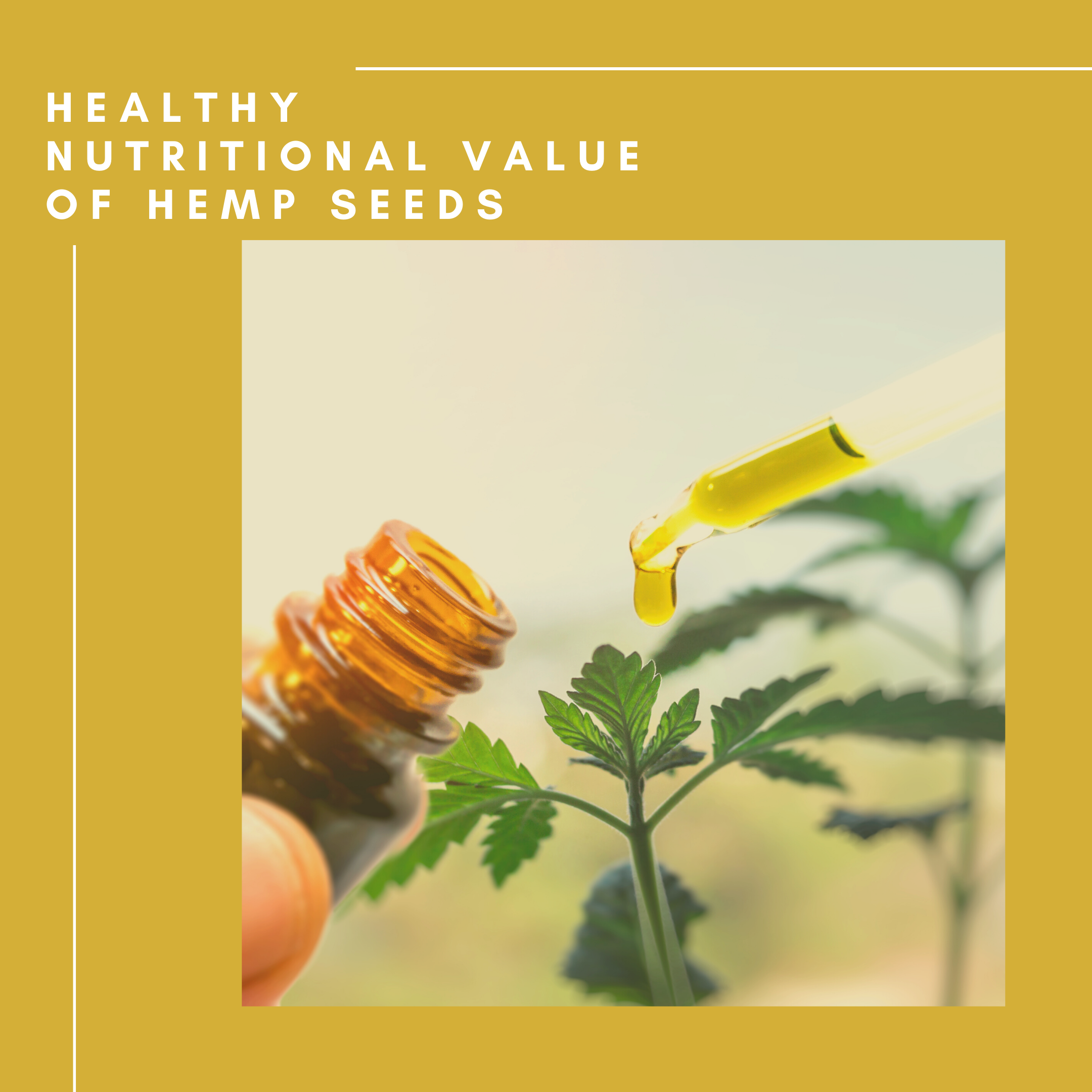 Healthy Nutritional Value Of Hemp Seeds