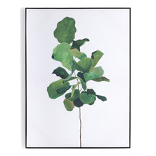 Load image into Gallery viewer, Fiddle Leaf Fig