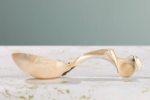 A Mother of Pearl Shell Spoon - Greystones Antiques