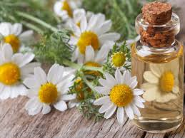 The Best Deals Online - Chamomile Oil
