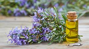 The Best Deals Online - Rosemary Oil