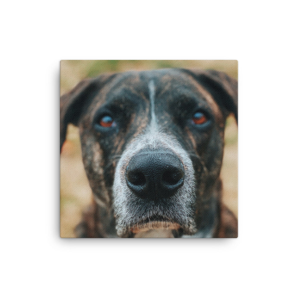 Customizable 16x16 Canvas Print